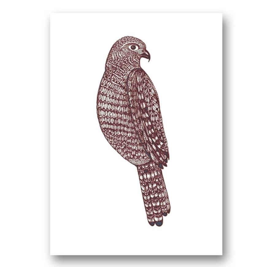 Picture of Miranda Brown - Karearea/NZ Falcon